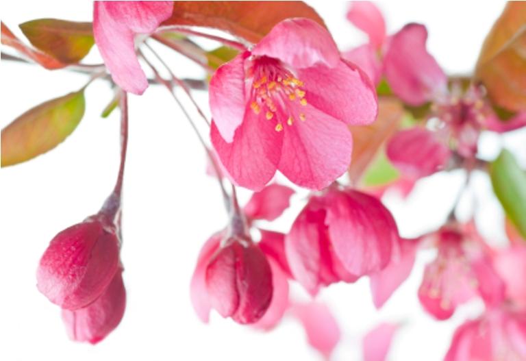 Bachova kvetová terapia